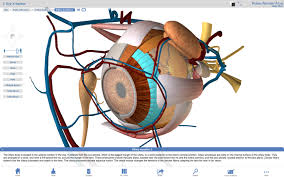 3d Human Anatomy Atlas Anatomy Software Visible Body Pc Or Mac