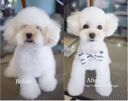 best 25 dog grooming styles ideas on pinterest japanese dog