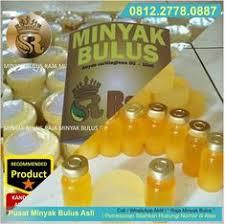 Minyak Bulus Asli Papua jual minyak bulus asli di samarinda minyak bulus kalimantan jual