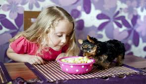 top 11 tricks to get your new puppy eat his dry dog food dog