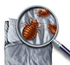 What Are The Red Bugs On Concrete by Kill All Bed Bugs How To Detect And Get Rid Of Bed Bugs