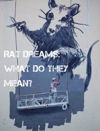 Being Blind In A Dream Rat Dream Meanings And Interpretations Exemplore
