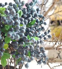 flowers and fruits aliexpress buy 10pcs decorative blueberry fruit berry