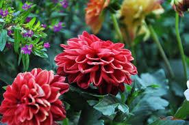 ornamental flowers 2 paul militaru