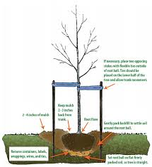 water resilience with gardens and trees