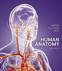 anatomy coloring book pearson the anatomy coloring book 9780321832016 medicine health