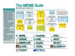 Meme Motif - motif andpatterndatabase