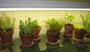 grow lights for indoor herb garden kitchen counter herb garden