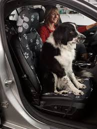10 ways to make your car pet friendly kraco