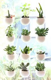 tiny apartment patio herb garden staradeal com