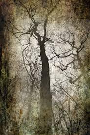 tim burton tree by paparoachlover95 on deviantart