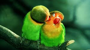 pics hd parrot hd wallpapers