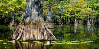 Louisiana scenery images The wetland lessons tes teach jpg