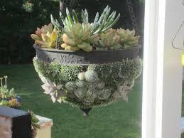 garden beautiful succulents in hanging pots garden