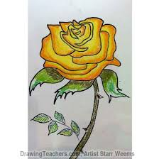 drawn red rose yellow rose pencil and in color drawn red rose