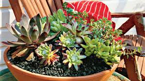 Gardening Pictures Spectacular Container Gardening Ideas Southern Living