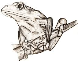 frog sketch by rsimpey on deviantart