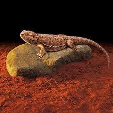 exo terra heat wave rock electronic heat stone large lizard