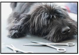 diy dog grooming table diy dog grooming how to groom your dog yourself