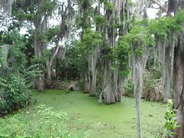 bayou party theme ideas swamp themed decorations morbid mardi