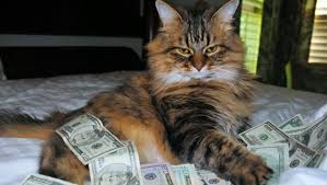 Rich Cat Meme - cash cats photo and art show flaunts hip trifecta of money guns