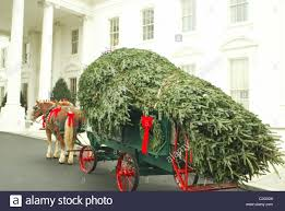 the white house blue room christmas tree is delivered by the