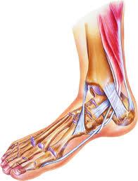 High Ankle Sprain Anatomy What To Do For A Sprained Ankle Harvard Health