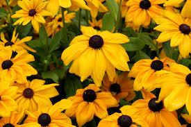 yellow flowers file yellow flowers 5982179610 jpg wikimedia commons