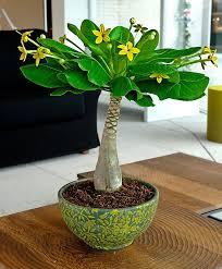 Indoor Flower Plants Best 25 Exotic House Plants Ideas On Pinterest Flowering House