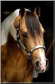 8958 best julie u0027s horse references images on pinterest beautiful