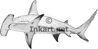 great hammerhead stock art illustration