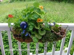 all purpose flower container gardening at home