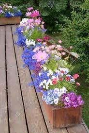 465 best flowers for my yard pots images on pinterest decks
