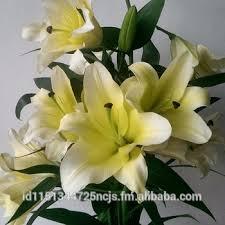 Fresh Cut Flowers Fresh Cut Lilium Buy Lilium Cut Flowers Product On Alibaba Com