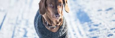 sweater with dogs on it 10 best sweaters for winter warmth 2018 the clinic