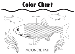mooneye fish coloring sheet michigan green schools