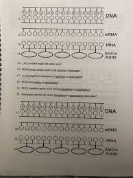 date protein synthesis worksheet directions 1