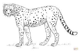 cheetah color page unique cheetah coloring pages 88 on free