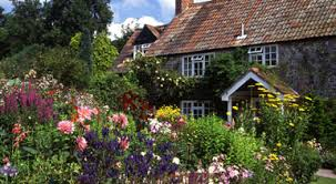 the domestic curator the informal cottage garden florals