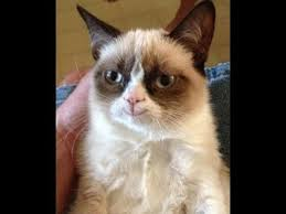 Grumpy Cat Has Died Youtube - grumpy cat smile d youtube