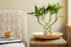 10 Best Houseplants To De by 10 Best Indoor House Plants To Purify Your Air The10best Net
