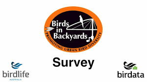 birds in backyards survey instructions youtube