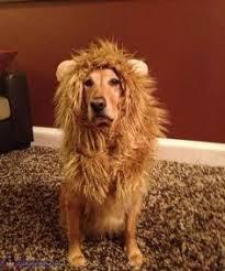 Lion Halloween Costume Pet Costume Lion Mane Wig Dog Cat Halloween Clothes Festival
