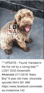 Dog Lady Meme - update found handed in the the vet by a caring lady lost dog
