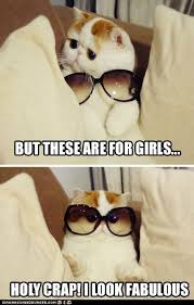 Hipster Cat Meme - hipster cat is all about fashion lel pinterest hipster