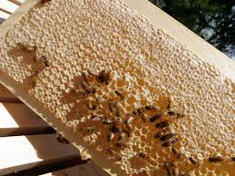 the pros and cons of beekeeping bee in harmony