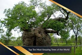 most amazing trees of the world top ten