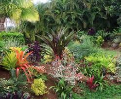 tropical garden flower champsbahrain com