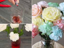 35 best how to dye flowers images on pinterest dyes paper