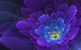 blumen lila lila blumen auszug hintergrundbilder lila blumen auszug frei fotos